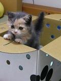 Akili (cat)